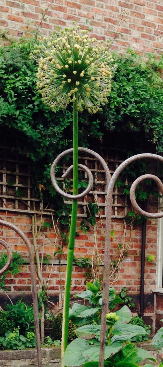 The Little Brick House | Decorative Home Accessories and Gifts | Rusty Metal Plant Supports