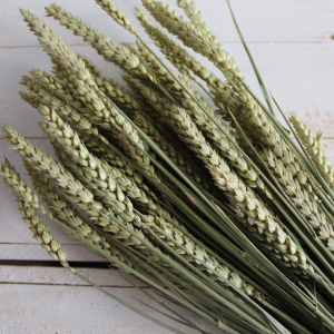 Dried Flowers - Green Wheat