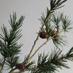 Artificial Branch Pine Cones