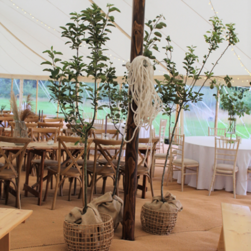 Fruit Trees in Marquee