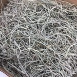 Spanish Decorative Moss