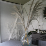 Dried Silver Pampas
