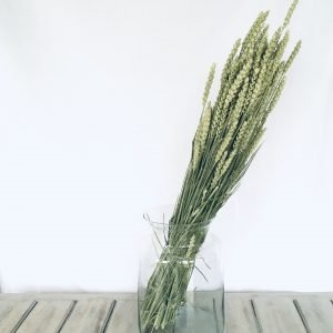 Dried Green Wheat