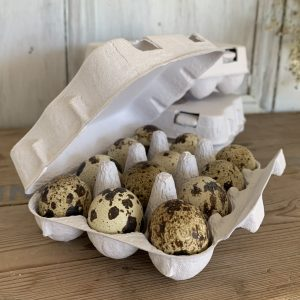 Quail Eggs Blown