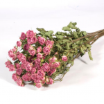 Dried Spray Roses Pink